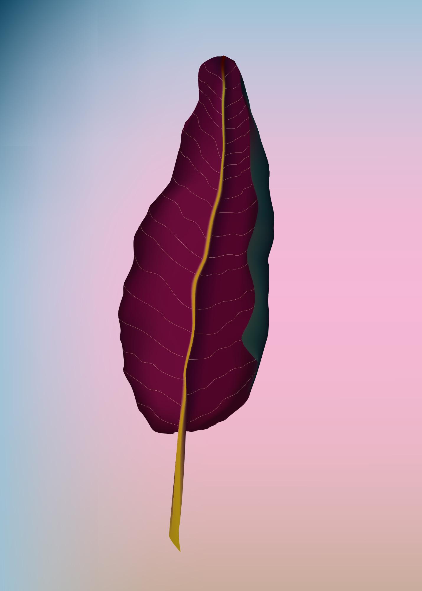 Calathea roseopicta (Pfeilwurzelgewächs), Irene Szankowsky